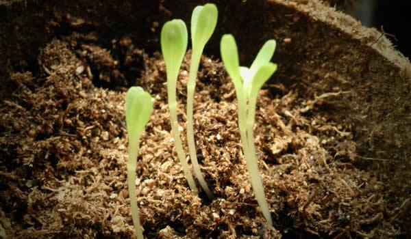 homeopatía plantas
